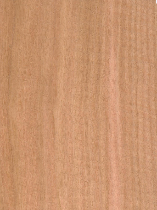 Eucalyptus Quarter Cut Frisse