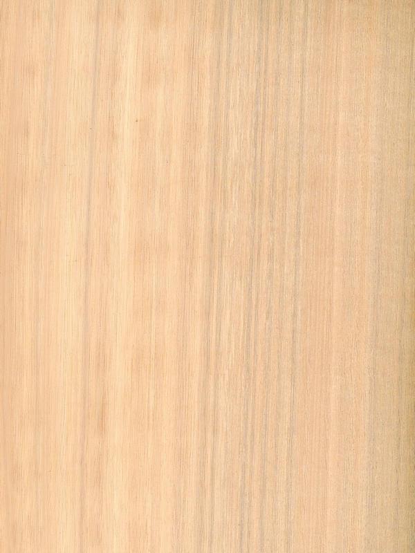 Eucalyptus Quarter Cut Nacre BBO 100