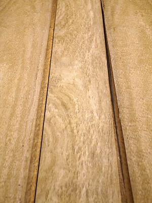 Eucalyptus Pommele