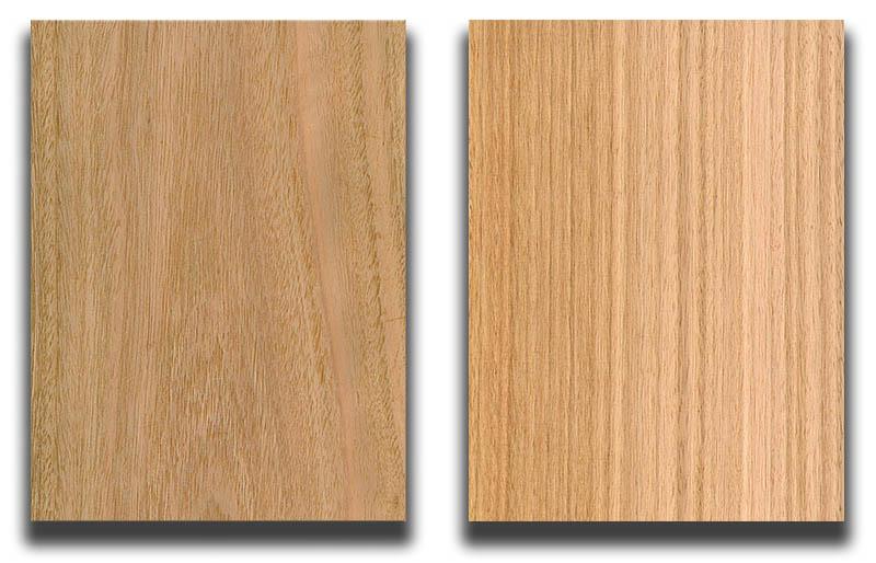 Eucalyptus Cut